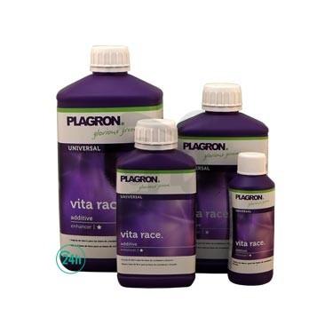 Vita Race cannabis plant