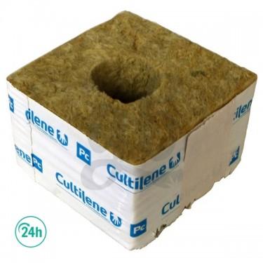 Cutilene Seed Plugs...