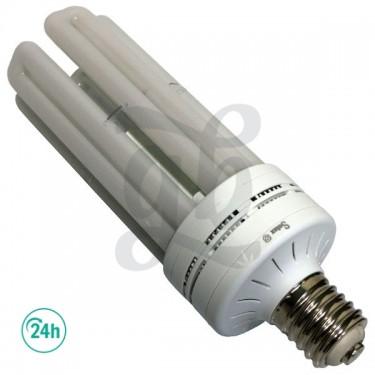 Solux Flowering LED Bulb