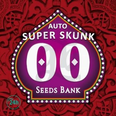 Auto Super Skunk planta de marihuana