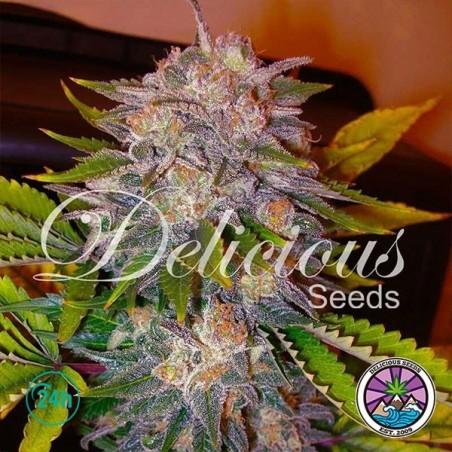 Caramelo planta de marihuana