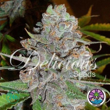 La Diva Auto planta de marihuana
