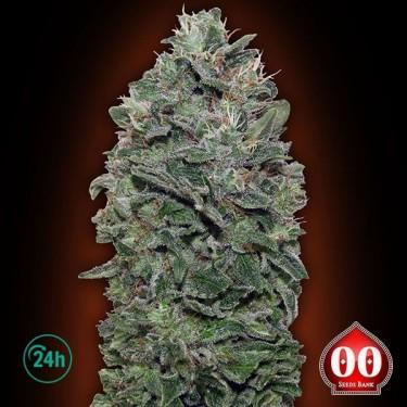 Sweet Soma planta de marihuana