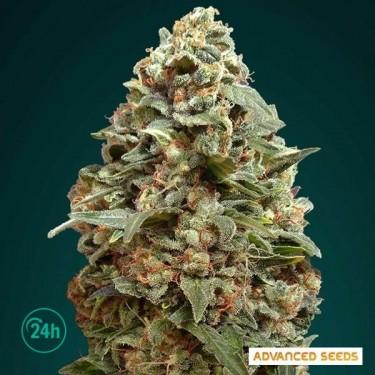 Afghan Skunk planta de marihuana