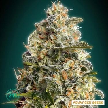 Heavy Bud planta de marihuana