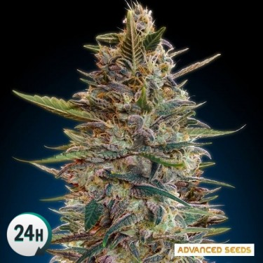 Auto Blue Diesel planta de marihuana