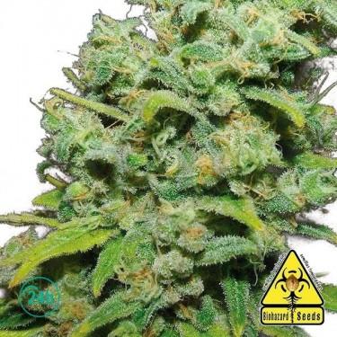 Psicotropic planta de marihuana