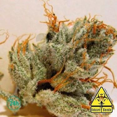 Napalm planta de marihuana