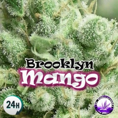 Brooklyn Mango