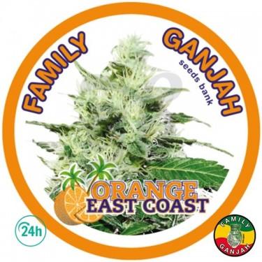 Orange East Coast