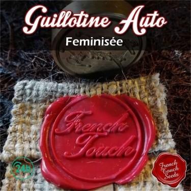 Guillotine Auto