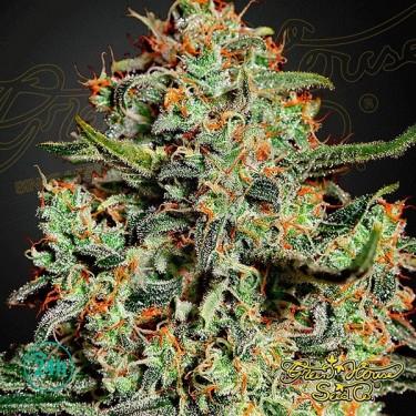 Semilla de marihuana