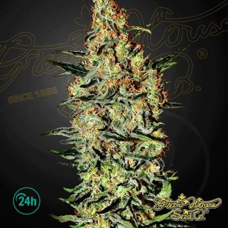 Neville's Haze planta de marihuana