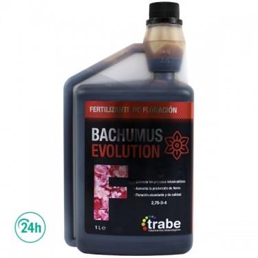 Bachumus Evolution F (Floración)