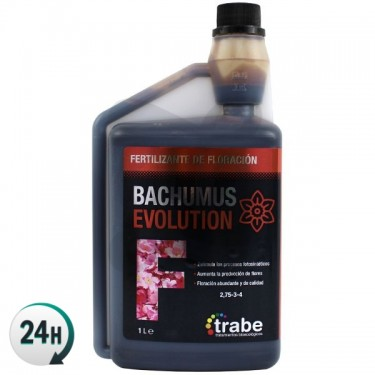 Bachumus Evolution F...