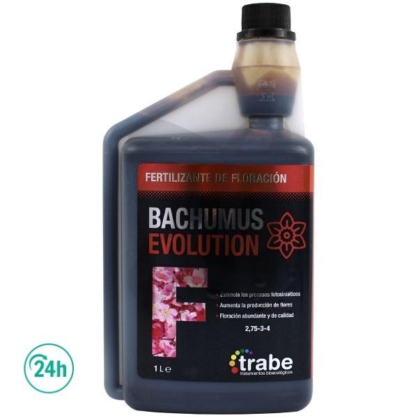 Bachumus Evolution F (Floraison)
