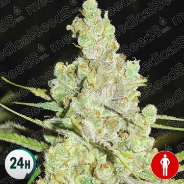 1024 cannabis plant