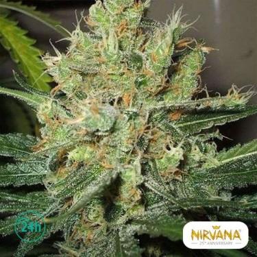 Pure Power Plant planta de marihuana