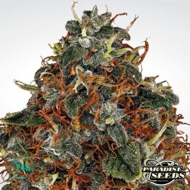 Space Cookies planta de marihuana