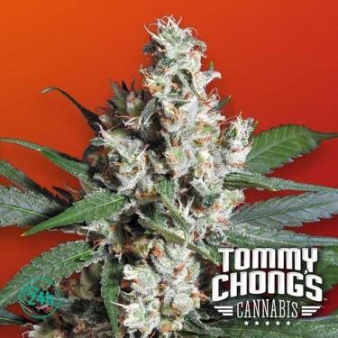 L.A. Amnesia planta de marihuana
