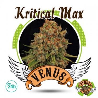 Kritical Max cannabis plant
