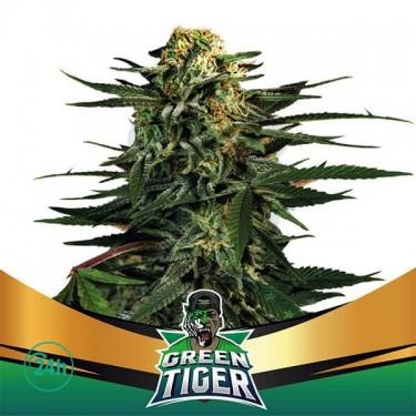Green Tiger Faster Flowering