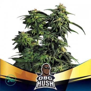 OBG Kush Faster Flowering