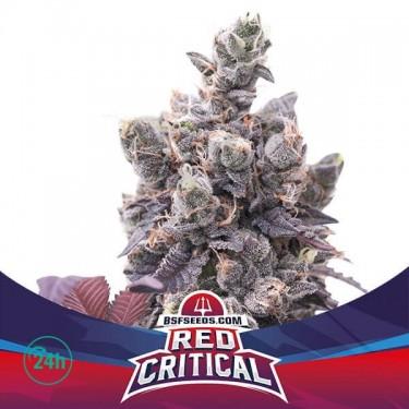 Red Critical Auto