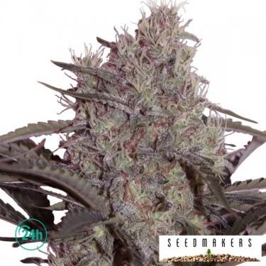 Jack Widow Plante de marijuana