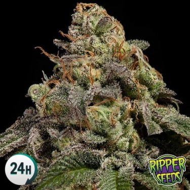 OMG Plante de marijuana