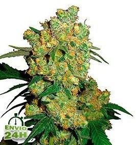 The Most Productive Strains