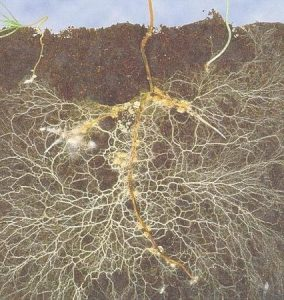 Excess water in your crops