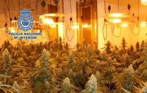 Spain Produces Cannabis for All of Europe indoor photo