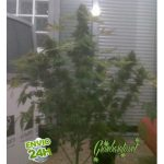 Stimulate Flowering in your Plants