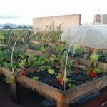 Urban Gardening – Growing Veggies in the City