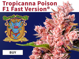 Tropicana Poison F1 Sweet seeds