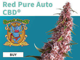 Promo Red Pure Auto CBD