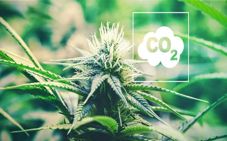 co2 for plants