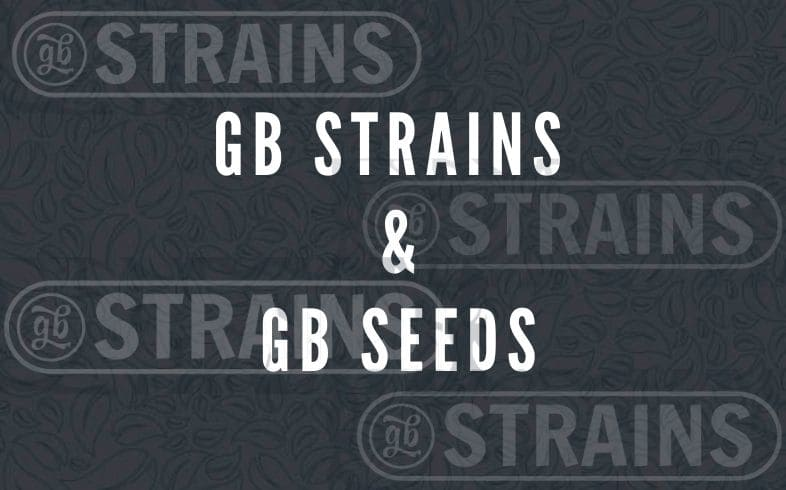 differences between gb strains and gb seeds