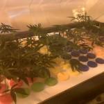 Cómo hacer esquejes de marihuana, la forma más fácil, propagador X-Stream de Nutriculture