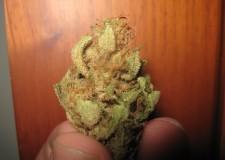 Como Secar y Curar Bien Tu Cosecha De Marihuana