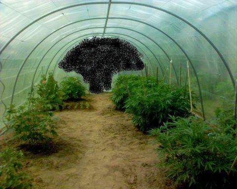 Invernadero para plantas de marihuana