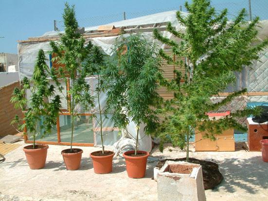 Como Plantar Marihuana Y Cuando