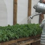 Trucos sobre como regar tus Plantas de Marihuana