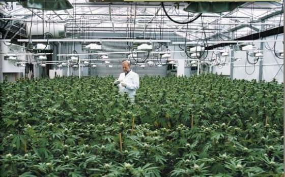 Paramètres de la culture intérieure du cannabis - Blog GrowBarato