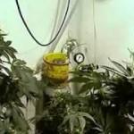 Como usar Co2 correctamente Cultivo de Marihuana