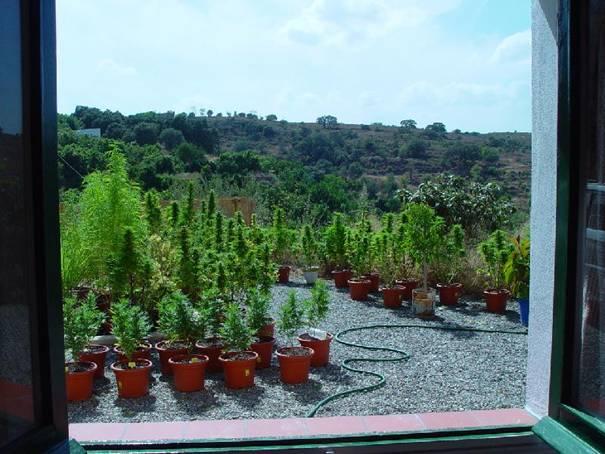 Cultivo De Marihuana En Exterior Paso A Paso