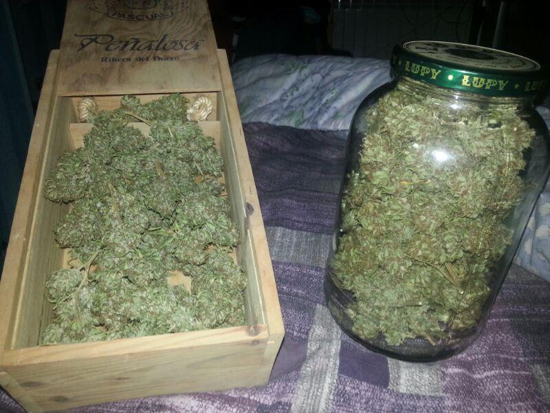 Como plantar marihuanas en maceta casa dise o - Como plantar marihuana en casa paso a paso ...