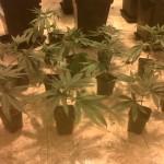 10 consejos para el cultivo exterior blog de grow barato for Produccion marihuana interior