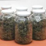 Secado marihuana